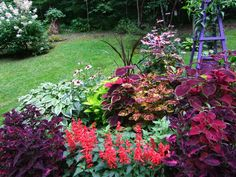 bed with coleus, salvia, mixed