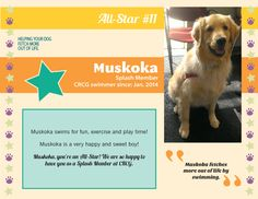 Meet CRCG Club FETCH All Star, Muskoka! Muskoka swims for fun, exercise, and play time!