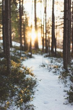 te5seract:    Sunday Forest Walk  by  Anton Funseth
