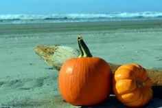 pumpkin on beach - Bing Images
