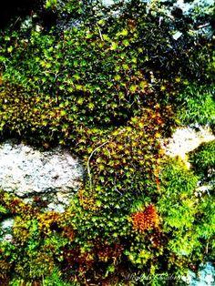 Moss by M.E.