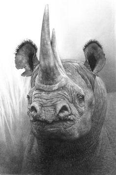 "Artist: Ralph N Murray III; Pencil 2011 Drawing ""African Black Rhino"""