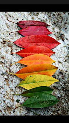 The colors of Fall