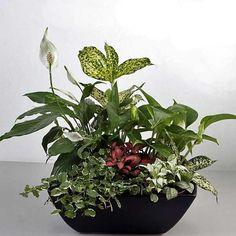 Mixed Indoor Plants In Basket Arrangement