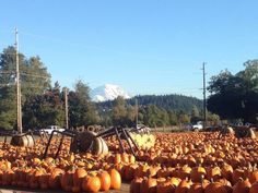 2. Spooner Farms, Puyallup