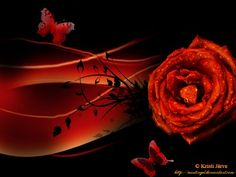 20  Beautiful Rose Theme Valentine Wallpapers