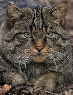 Wow! This is some serious feline-ness. Mighty handsome.