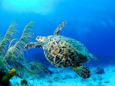 Ultimate travel guide to Cayman Brac. The Cayman Islands. Grand Cayman Island, Cayman Islands, Barbados, Carnival Spirit, Parks, Turtle Habitat, Tourism Department, Best Scuba Diving, Underwater World