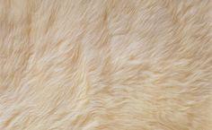 Fur Texture HD Wallpaper