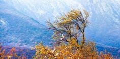 Tree Story... Crimea, Ukraine.