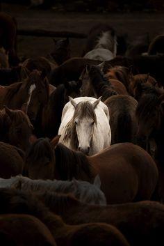 White horse by Mahmut FIRAT on 500px #horses #turkey