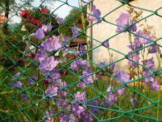 Fiori violetti.