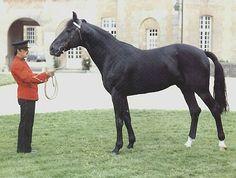 Latvian Harness Horse (Standard and Light Type) basic information