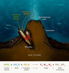 how chemosynthesis works Chemosynthetic carbonates that precipitated by the oxidation of organic carbon  around  works of silica-cemented microfractures, which are often in the range.