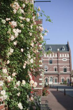 Rose Festival at Huis Ten Bosch 2 Sasebo City & Saikai City Flowers / Old buildings and streets / Theme parks