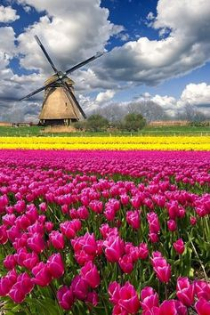 Tulips(tulpen) in de Keukenhof/Lisse/ Noord Holland Netherlands Tourism, Holland Netherlands, Holland Europe, Tulip Fields Netherlands, Netherlands Country, Haarlem Netherlands, Visit Holland, Places To Travel, Places To See