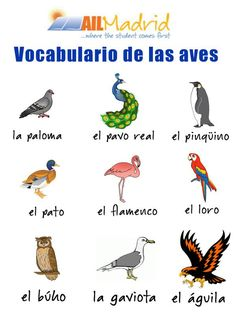 Improve your spanish with this vocabulary !