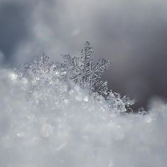 Crystal Snowflake Photograph  - Crystal Snowflake Fine Art Print