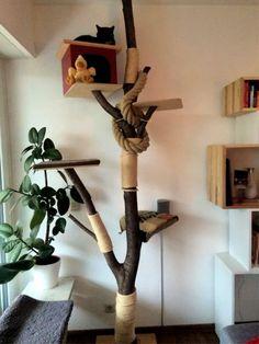 20 Free DIY Cat Tree House Plans and Ideas Cat Tree House, Tree House Plans, Diy Cat Tree, Cat Towers, Cat Shelves, Cat Playground, Unusual Animals, Unusual Pets, Cat Enclosure