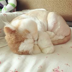 Likes, 346 Comments - Cute baby animal videos pics (Louise Pena. Cute Cats And Kittens, Baby Cats, Kittens Cutest, I Love Cats, Cute Baby Animals, Animals And Pets, Funny Animals, Pretty Cats, Beautiful Cats