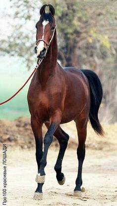 | OK.RU Pretty Horses, Beautiful Horses, Animals And Pets, Cute Animals, Different Horse Breeds, Strongest Animal, Marwari Horses, Art Poses, Horse Pictures
