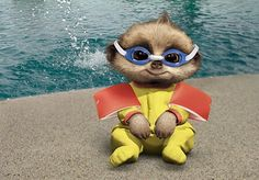 Baby Oleg's first swimming lesson Baby Pictures, Cute Pictures, Baby Meerkat, Cute Small Animals, Swim Lessons, Family Album, Kids Cards, Make Me Smile, Animation