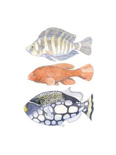 Three Fish by Natalie Groves for Minted