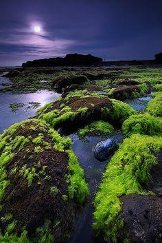 Green Illuminated