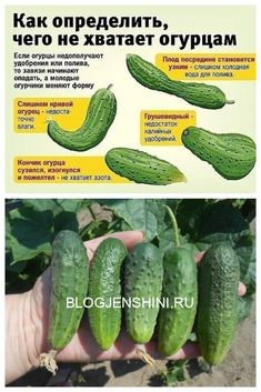 Vegetable Garden, Garden Plants, Smart Garden, Diy Greenhouse, Good To Know, Homesteading, Cucumber, Garden Design, Beets