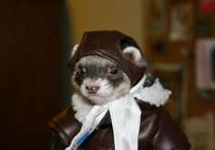 I used to have that exact jacket and head piece! I so wish i could find it now to take a photo of my ferret wearing it! :P