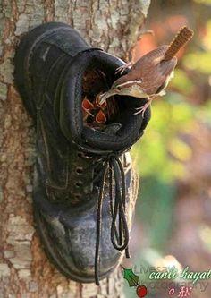 home made bird nest