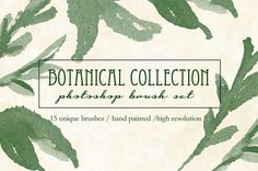 Botanical Brush Collection by Little Creek Co. on @creativemarket