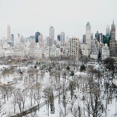 Everyone needs to experience at least one white Christmas in Central Park. (Source: Travel and Leisure)