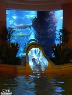 a salt water aquarium with a slide going through it that comes out into your pool... that would be so awesome!