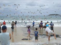 Praia dos Ingleses, Florianopolis, Brazil. Wonderful place.