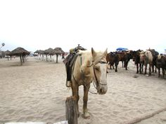 Horses on the beach in Rosarito California.