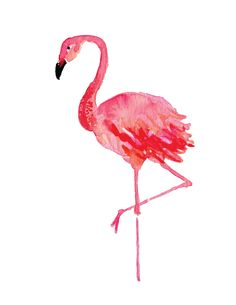 Image result for flamingo