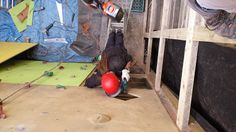 20140416_140125 Climbing Wall, Explore, Adventure, Adventure Movies, Adventure Books, Exploring