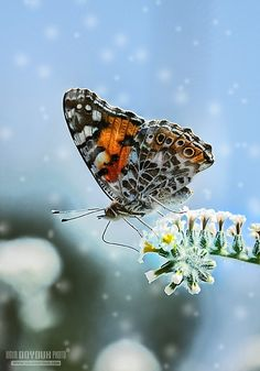 Loveliness. Magnificent Butterfly!
