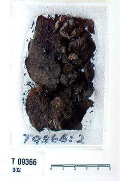 """Textile attached to tortise brooch from Nesna (Viking) (T 9366) """"Utskilt ved magasinrevisjon. Opprinnelig beskrivelse: Et par ovale skaalformede spænder af bronce af formen R.652. Baade paa den indre og ydre side er stykker af tøi, tildels tydelig læred, rustet fast til dem."""""""