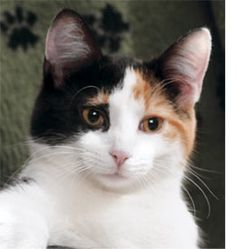 Calico--such a sweet face...like my bonnie. Miss her so much.