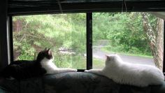 Two Cats and an RV - As Told by the Cats   http://www.squidoo.com/traveling-with-cats