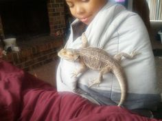 Bearded Dragon Bearded Dragon, Our Baby, My Love, Animals, Babies, Animales, Babys, Animaux, Animal