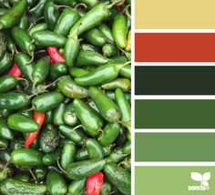 peppered palette - Love this site, I can create my own focal color and the site will provide different options of color palettes to go with it. in this one my focal color was Nephrite jade, color from the top. Colour Pallette, Colour Schemes, Color Combos, Colours That Go Together, Seasonal Color Analysis, Design Seeds, Color Studies, World Of Color, Color Theory