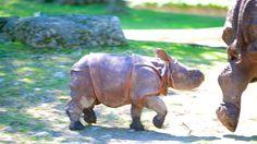 バッファロー動物園