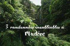 Une sélection des trois plus belles randonnées à faire sur l'île de Madère : la Caldeirão Verde, le Pico Ruivo, et la pointe de São Lourenço.