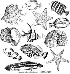 Realistic collection of fish, seashells, starfish. Vector illustrations on white background. Marine set. Perfect for invitations, greeting cards, postcard, posters, prints, banners.