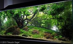 2013 AGA Aquascaping Contest - Entry #311 Best I've seen in awhile!