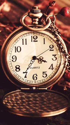 Vintage Watch Pocket Macro Autumn Berries Dry Chain Dial iPhone 6 wallpaper