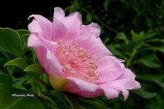 Republica Dominicana Bayahibe flower